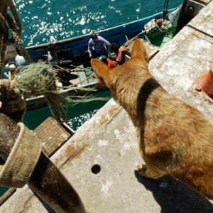 Seis medidas socioeconómicas para apoyar a las y los pescadores de merluza común frente a la crisis ecológica que atraviesa el recurso.