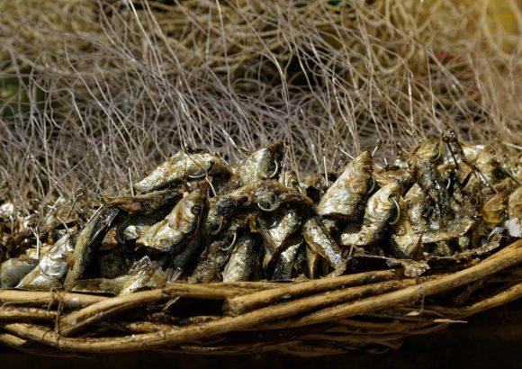 CIET-LR continúa apoyando el fortalecimiento de las gobernanzas pesquero artesanales de Caleta Llico en la Provincia de Arauco, Región del Biobío.